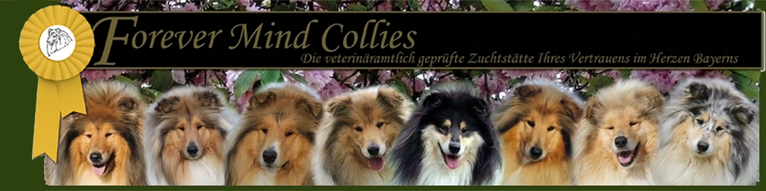 Forever Mind Collies