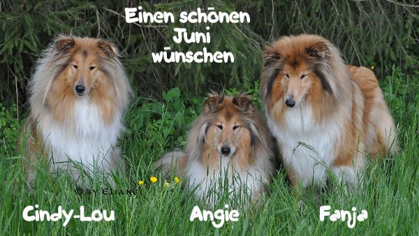An den Beitrag angehängtes Bild: http://colliewelt.de/whitehorsehill/Bilder/Userbilder/1048.jpg