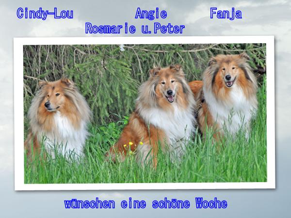 An den Beitrag angehängtes Bild: http://colliewelt.de/whitehorsehill/Bilder/Userbilder/1061.jpg