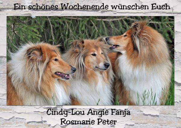 An den Beitrag angehängtes Bild: http://colliewelt.de/whitehorsehill/Bilder/Userbilder/1166.jpg