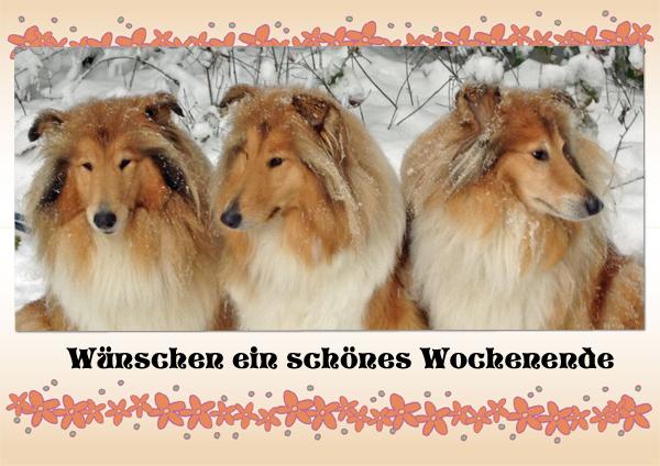 An den Beitrag angehängtes Bild: http://colliewelt.de/whitehorsehill/Bilder/Userbilder/1229.jpg