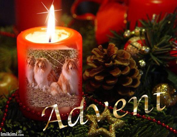 An den Beitrag angehängtes Bild: http://colliewelt.de/whitehorsehill/Bilder/Userbilder/1377.jpg