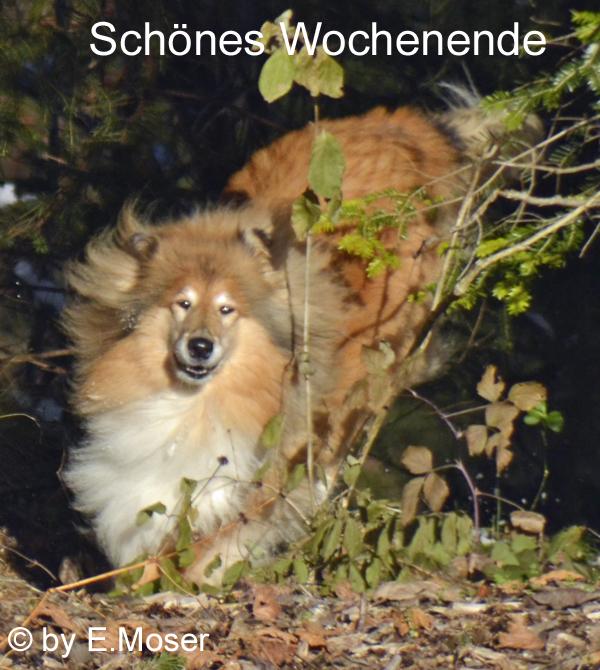 An den Beitrag angehängtes Bild: http://colliewelt.de/whitehorsehill/Bilder/Userbilder/1465.jpg