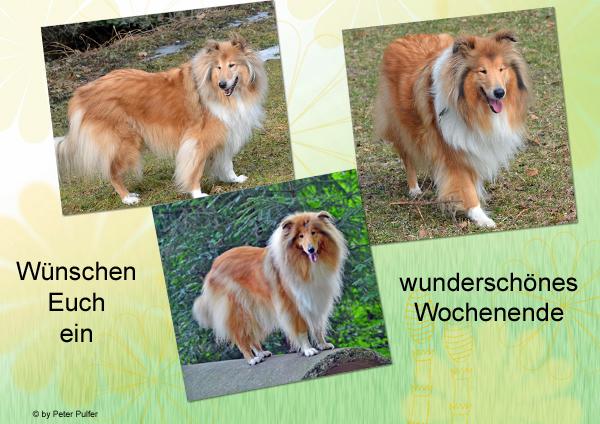 An den Beitrag angehängtes Bild: http://colliewelt.de/whitehorsehill/Bilder/Userbilder/1472.jpg