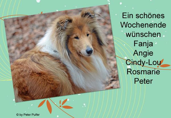 An den Beitrag angehängtes Bild: http://colliewelt.de/whitehorsehill/Bilder/Userbilder/1475.jpg