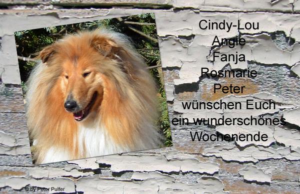 An den Beitrag angehängtes Bild: http://colliewelt.de/whitehorsehill/Bilder/Userbilder/1477.jpg