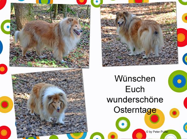 An den Beitrag angehängtes Bild: http://colliewelt.de/whitehorsehill/Bilder/Userbilder/1478.jpg