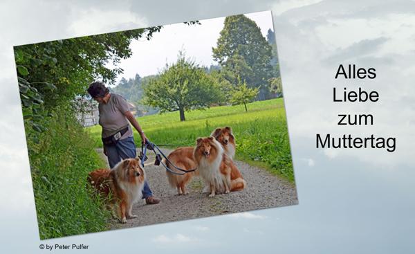 An den Beitrag angehängtes Bild: http://colliewelt.de/whitehorsehill/Bilder/Userbilder/1485.jpg