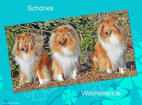 An den Beitrag angehängtes Bild: http://colliewelt.de/whitehorsehill/Bilder/Userbilder/1487.jpg