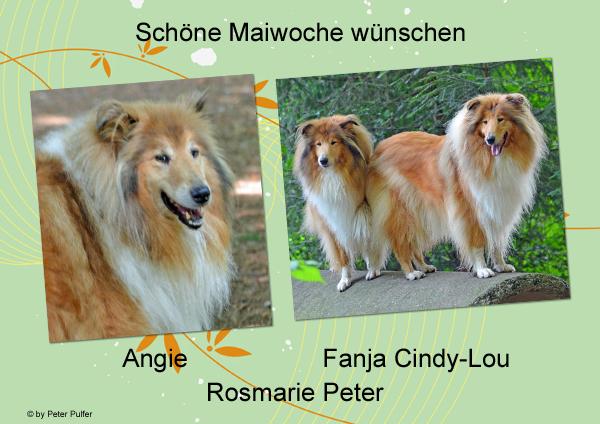 An den Beitrag angehängtes Bild: http://colliewelt.de/whitehorsehill/Bilder/Userbilder/1490.jpg