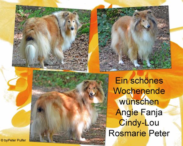 An den Beitrag angehängtes Bild: http://colliewelt.de/whitehorsehill/Bilder/Userbilder/1492.jpg