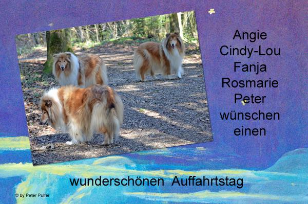 An den Beitrag angehängtes Bild: http://colliewelt.de/whitehorsehill/Bilder/Userbilder/1493.jpg