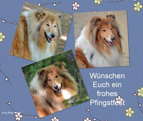 An den Beitrag angehängtes Bild: http://colliewelt.de/whitehorsehill/Bilder/Userbilder/1495.jpg