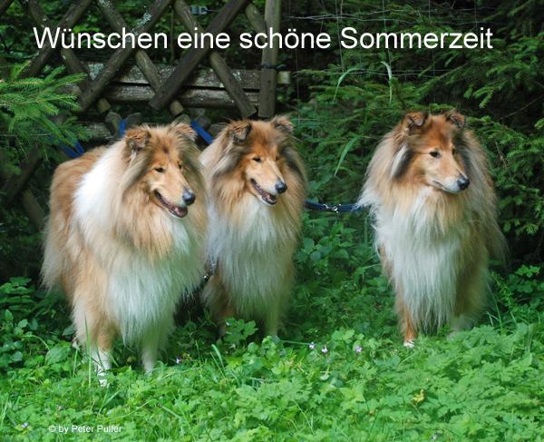 An den Beitrag angehängtes Bild: http://colliewelt.de/whitehorsehill/Bilder/Userbilder/1497.jpg