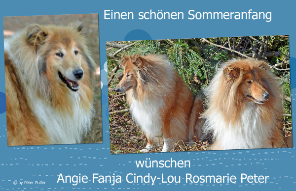 An den Beitrag angehängtes Bild: http://colliewelt.de/whitehorsehill/Bilder/Userbilder/1498.jpg