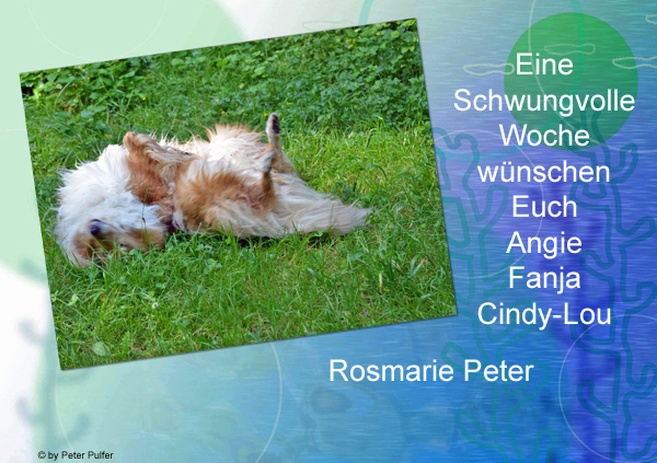 An den Beitrag angehängtes Bild: http://colliewelt.de/whitehorsehill/Bilder/Userbilder/1514.jpg