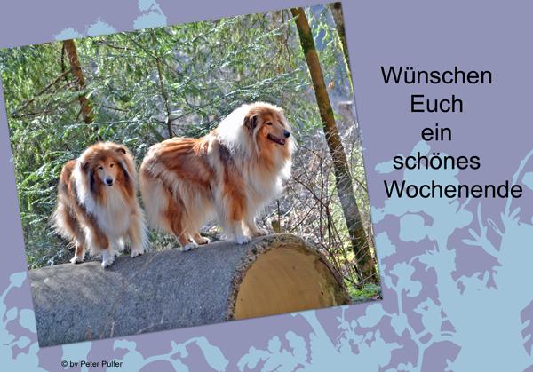 An den Beitrag angehängtes Bild: http://colliewelt.de/whitehorsehill/Bilder/Userbilder/1515.jpg