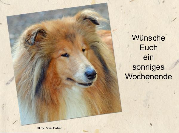 An den Beitrag angehängtes Bild: http://colliewelt.de/whitehorsehill/Bilder/Userbilder/1526.jpg