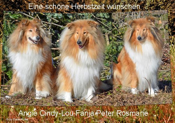 An den Beitrag angehängtes Bild: http://colliewelt.de/whitehorsehill/Bilder/Userbilder/1527.jpg