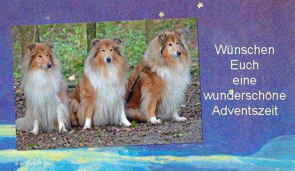 An den Beitrag angehängtes Bild: http://colliewelt.de/whitehorsehill/Bilder/Userbilder/1559.jpg