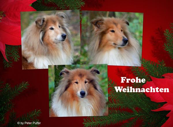 An den Beitrag angehängtes Bild: http://colliewelt.de/whitehorsehill/Bilder/Userbilder/1566.jpg