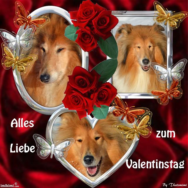An den Beitrag angehängtes Bild: http://colliewelt.de/whitehorsehill/Bilder/Userbilder/1620.jpg