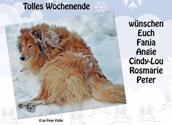 An den Beitrag angehängtes Bild: http://colliewelt.de/whitehorsehill/Bilder/Userbilder/1621.jpg