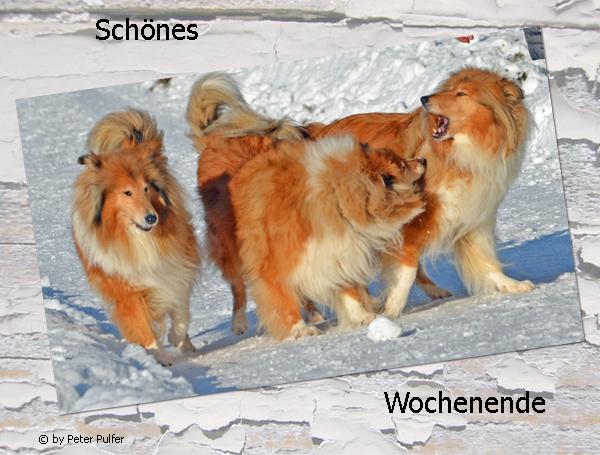 An den Beitrag angehängtes Bild: http://colliewelt.de/whitehorsehill/Bilder/Userbilder/1623.jpg