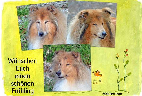 An den Beitrag angehängtes Bild: http://colliewelt.de/whitehorsehill/Bilder/Userbilder/1626.jpg