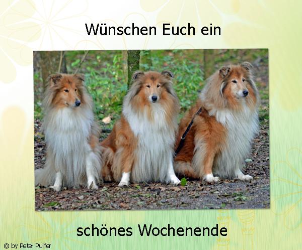 An den Beitrag angehängtes Bild: http://colliewelt.de/whitehorsehill/Bilder/Userbilder/1627.jpg