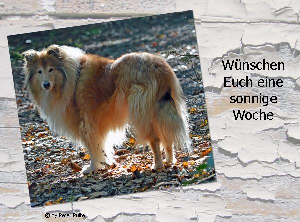 An den Beitrag angehängtes Bild: http://colliewelt.de/whitehorsehill/Bilder/Userbilder/1645.jpg