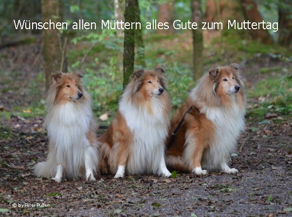An den Beitrag angehängtes Bild: http://colliewelt.de/whitehorsehill/Bilder/Userbilder/1648.jpg