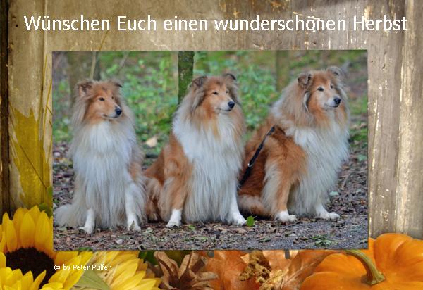 An den Beitrag angehängtes Bild: http://colliewelt.de/whitehorsehill/Bilder/Userbilder/1683.jpg