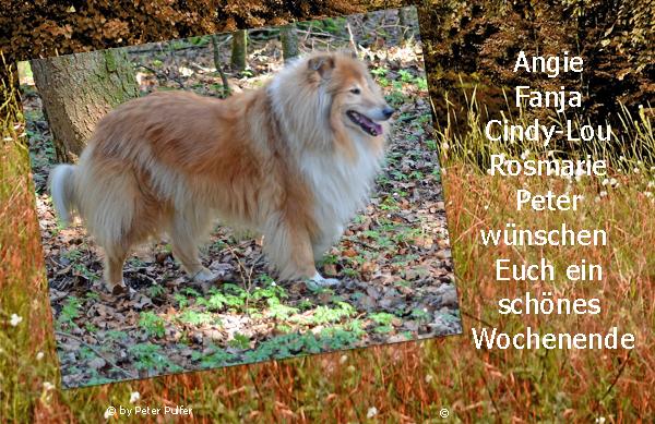 An den Beitrag angehängtes Bild: http://colliewelt.de/whitehorsehill/Bilder/Userbilder/1685.jpg