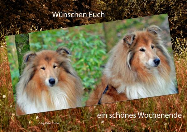 An den Beitrag angehängtes Bild: http://colliewelt.de/whitehorsehill/Bilder/Userbilder/1687.jpg