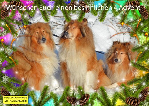 An den Beitrag angehängtes Bild: http://colliewelt.de/whitehorsehill/Bilder/Userbilder/1701.jpg