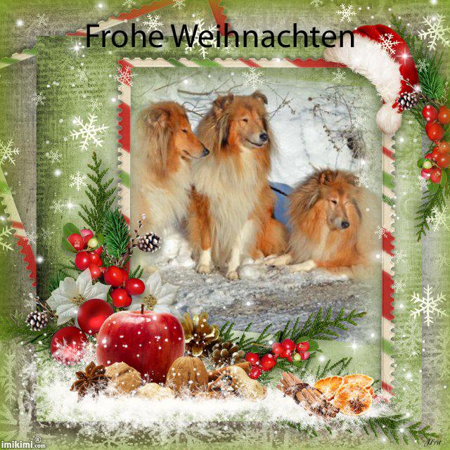 An den Beitrag angehängtes Bild: http://colliewelt.de/whitehorsehill/Bilder/Userbilder/1702.jpg