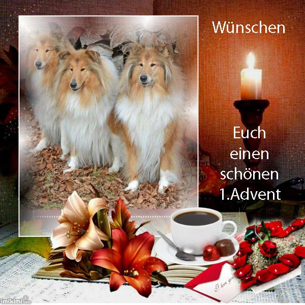 An den Beitrag angehängtes Bild: http://colliewelt.de/whitehorsehill/Bilder/Userbilder/1792.jpg