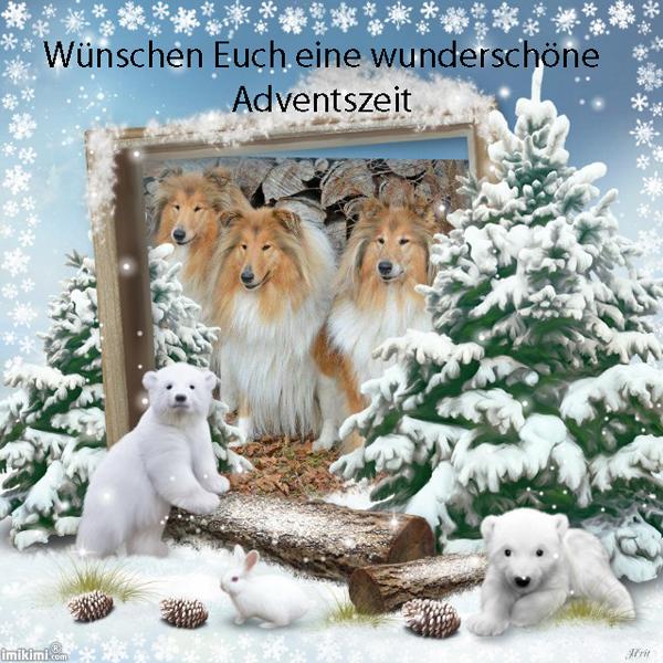 An den Beitrag angehängtes Bild: http://colliewelt.de/whitehorsehill/Bilder/Userbilder/1793.jpg