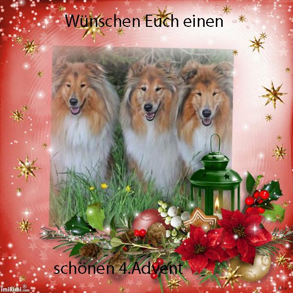 An den Beitrag angehängtes Bild: http://colliewelt.de/whitehorsehill/Bilder/Userbilder/1797.jpg
