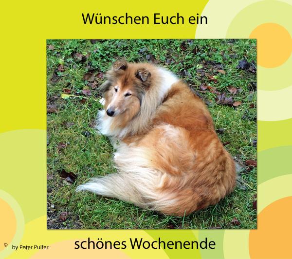 An den Beitrag angehängtes Bild: http://colliewelt.de/whitehorsehill/Bilder/Userbilder/1833.jpg