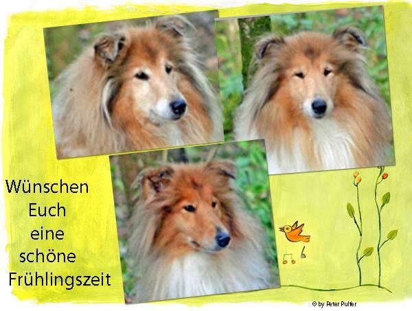 An den Beitrag angehängtes Bild: http://colliewelt.de/whitehorsehill/Bilder/Userbilder/1834.jpg