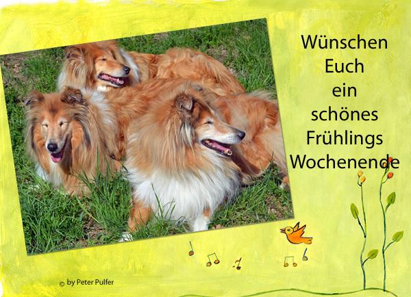 An den Beitrag angehängtes Bild: http://colliewelt.de/whitehorsehill/Bilder/Userbilder/1844jpg