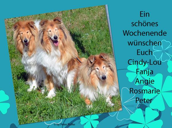An den Beitrag angehängtes Bild: http://colliewelt.de/whitehorsehill/Bilder/Userbilder/1861.jpg