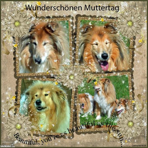 An den Beitrag angehängtes Bild: http://colliewelt.de/whitehorsehill/Bilder/Userbilder/1862.jpg