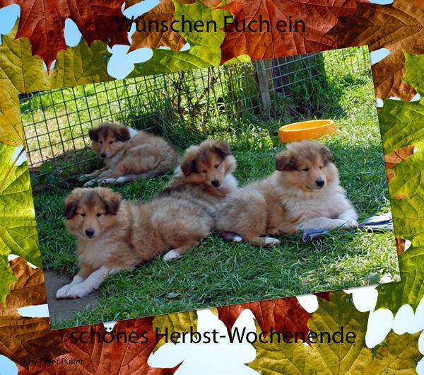 An den Beitrag angehängtes Bild: http://colliewelt.de/whitehorsehill/Bilder/Userbilder/1900.jpg