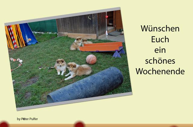 An den Beitrag angehängtes Bild: http://colliewelt.de/whitehorsehill/Bilder/Userbilder/1909.jpg