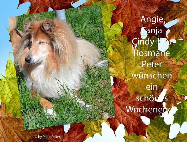 An den Beitrag angehängtes Bild: http://colliewelt.de/whitehorsehill/Bilder/Userbilder/1911.jpg