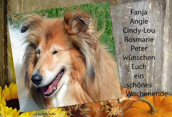 An den Beitrag angehängtes Bild: http://colliewelt.de/whitehorsehill/Bilder/Userbilder/1922.jpg