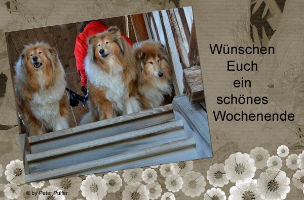 An den Beitrag angehängtes Bild: http://colliewelt.de/whitehorsehill/Bilder/Userbilder/1941.jpg